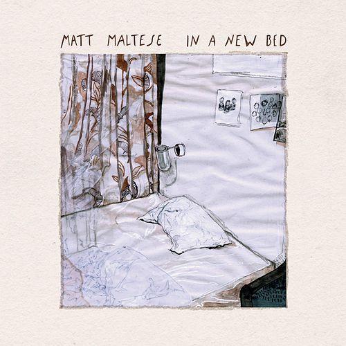 matt-maltese-in-a-new-bed